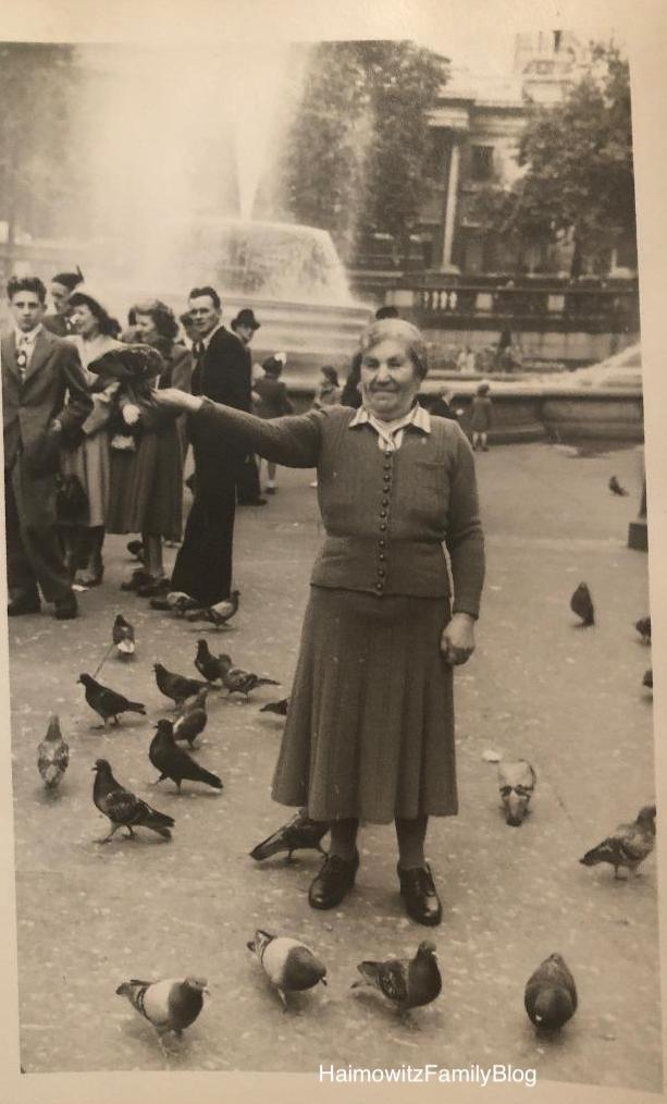 Polly:pigeon1949 copy